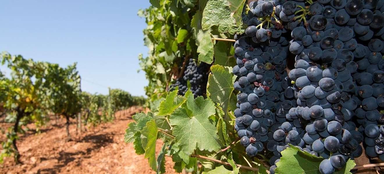 Raths Wein des Monats   Can Majoral Capgiró 2017