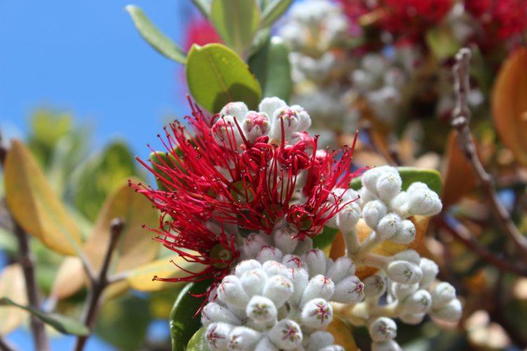Foto: In der Protea entdecken Sie wahre floristische Schätze.
