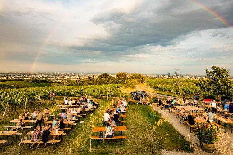 """Foto: Die """"Meeresterrasse"""" liegt mitten im Weinfeld und bietet einen sensationellen Ausblick auf die Stadt © Weingut Wieninger"""